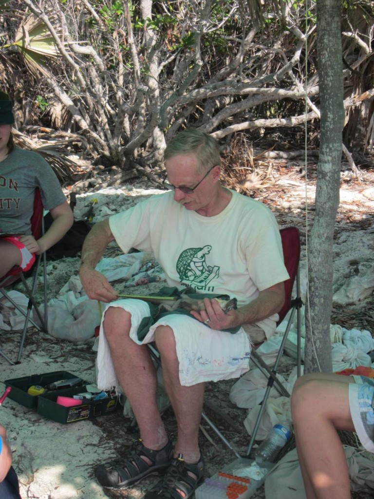 Measuring an Iguana